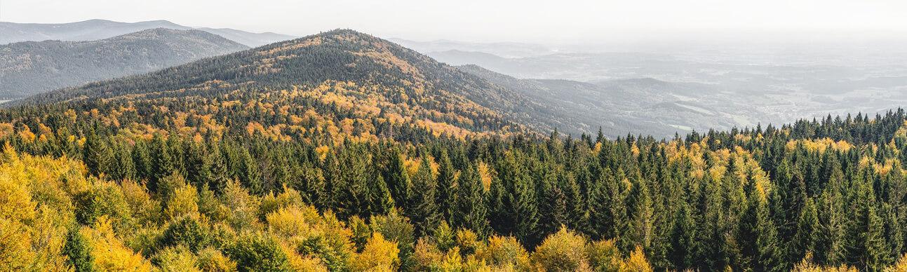 Bayerischer Wald bei Deggendorf