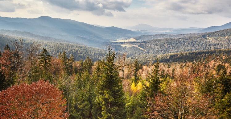 Bayerischer Wald bei Regen